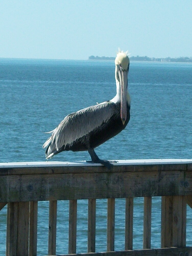 Pelican on the Pier by StudioN