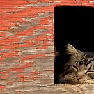 Sleeping Cat In the Dog House by georgiaart1974