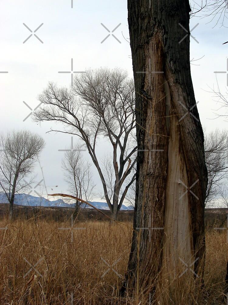 Split Trees II by Kimberly Miller