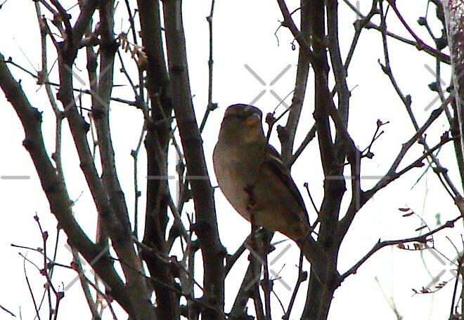Bird in Bush by Kimberly Miller