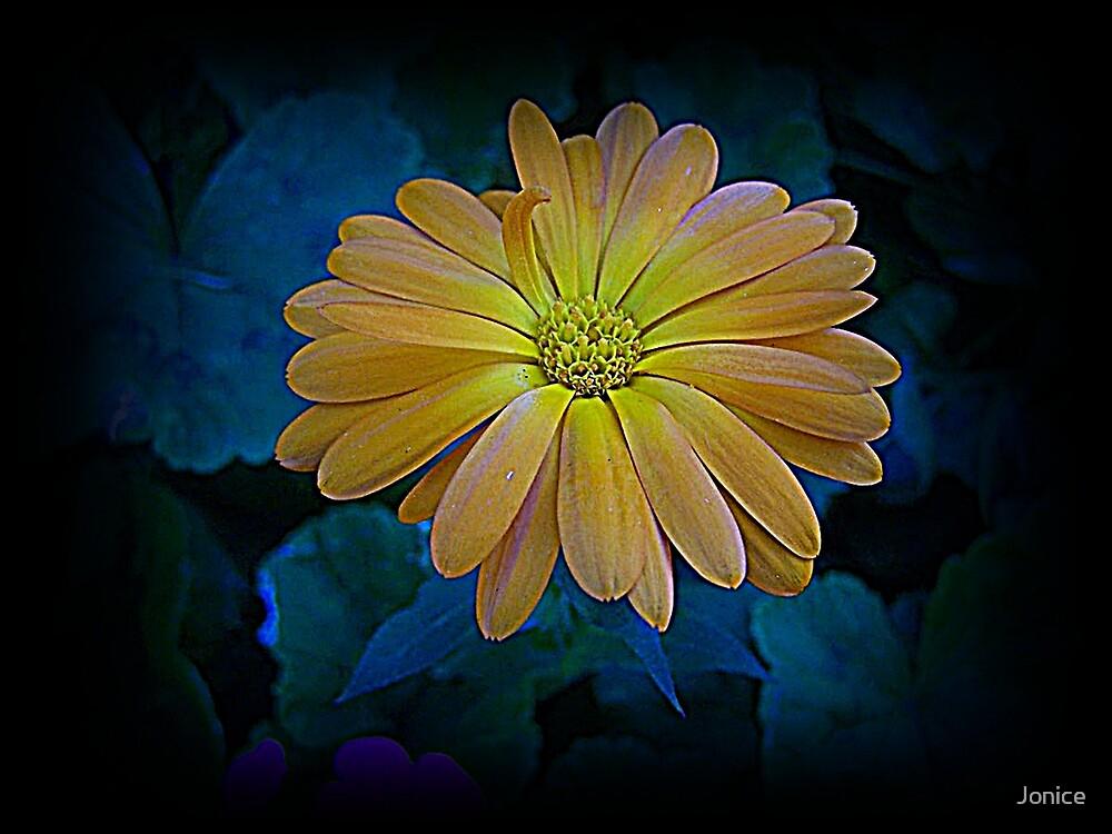 Single Yellow Orange Flower by Jonice