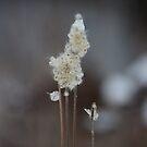 Winter floral by debfaraday