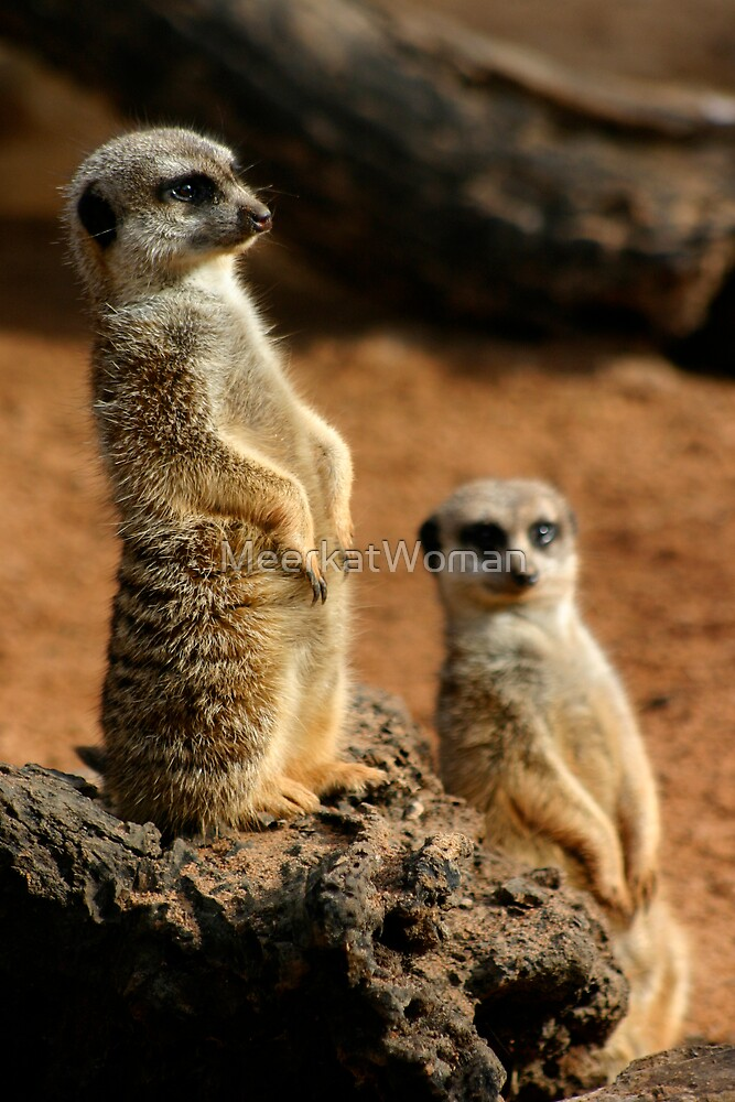 Meerkats United by MeerkatWoman