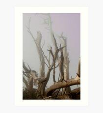 Misty morning Monterey Pinetrees Art Print