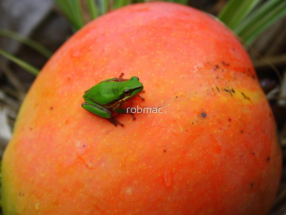 mango orange by robmac
