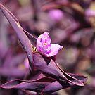 Dewflower by resin8n