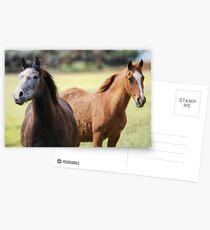 Two Horses Postcards