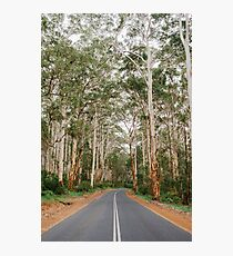 Into The Karri Forest Photographic Print