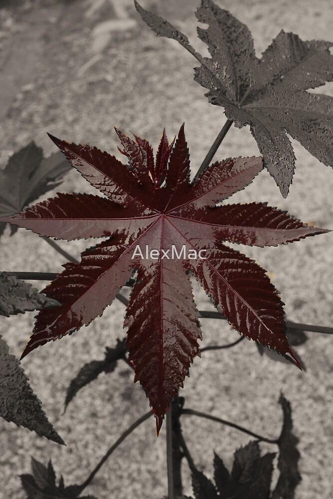 Wine coloured leaf by AlexMac