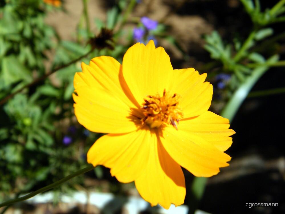 Flowers in Namibian Households by cgrossmann
