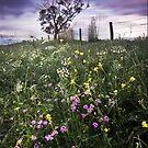 Wildflowers by Ben Ryan