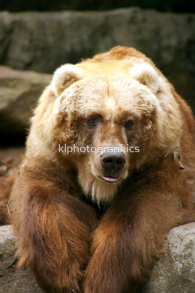 Kodiak Bear by klphotographics