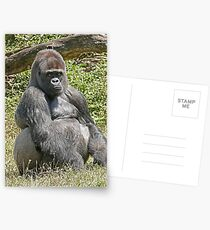 "An intimate portrait close-up 6 (c) (h) ""Back Silver"" A gorilla who is the star of the day .... Postcards"