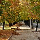 Along autumn  trees by jhawa