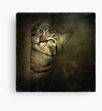 A Little Shy Canvas Print