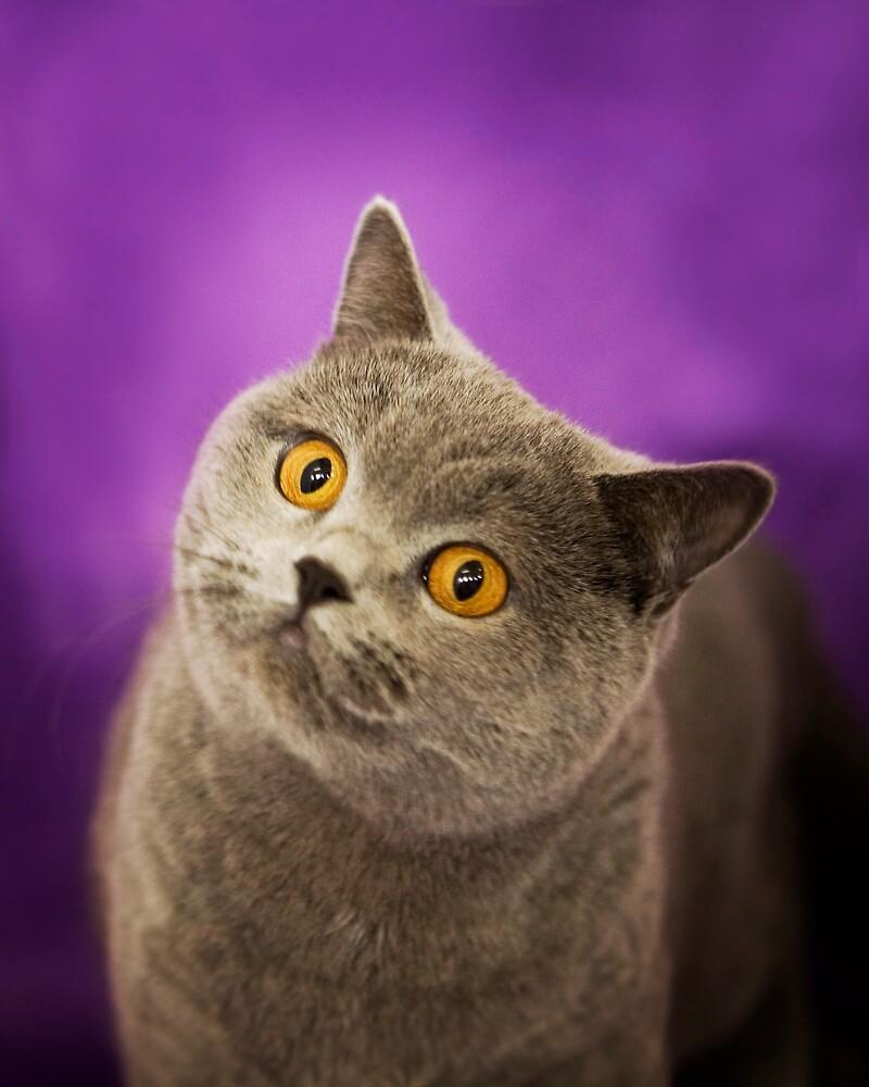 One Cute Cat! by cjmisme