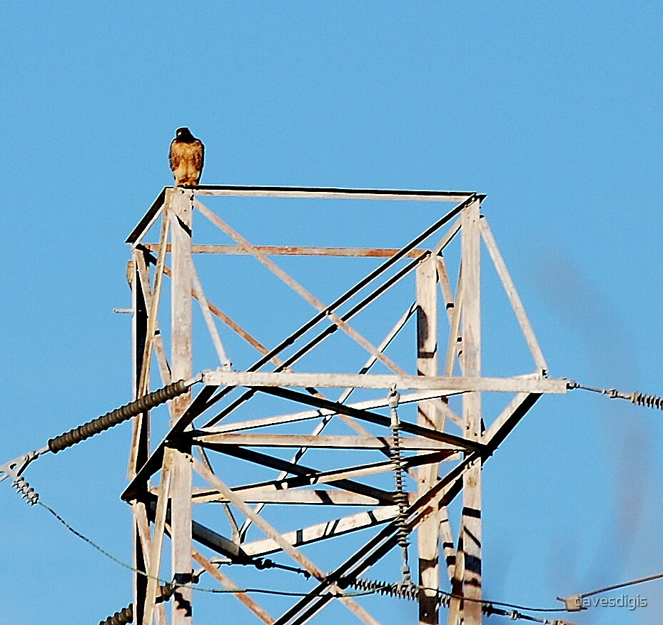 KING OF THE TOWER by davesdigis