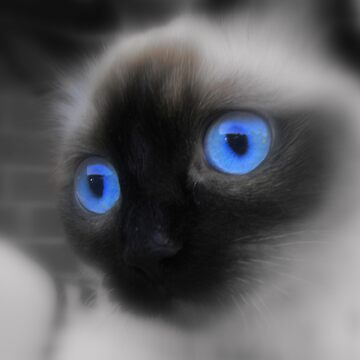 Behind Blue Eyes by SaharaLily