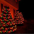 O Christmas Tree by BigD