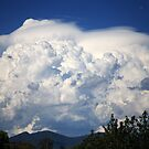 Childers Storm with Pileus by Julie Just