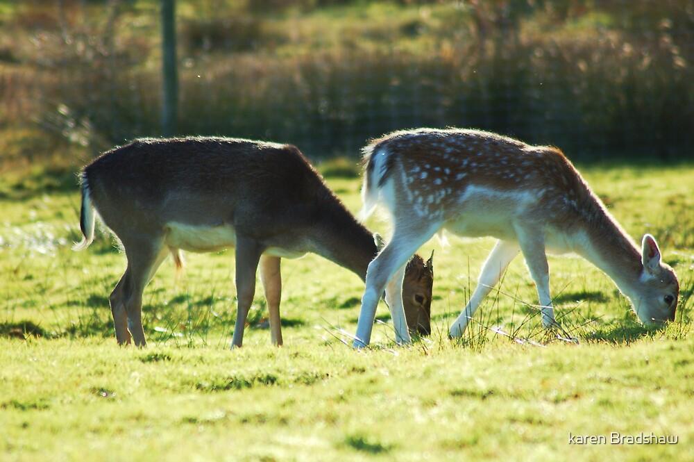 Dunnham Massey Deer Park by karen Bradshaw