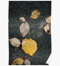 Dried Leaves Wet Soil Poster