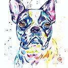 Boston Terrier by Lisa Whitehouse