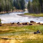 Bison at the River - Yellowstone National Park by Kathy Weaver