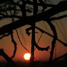 SUNDOWN  TREE by Sean Farragher