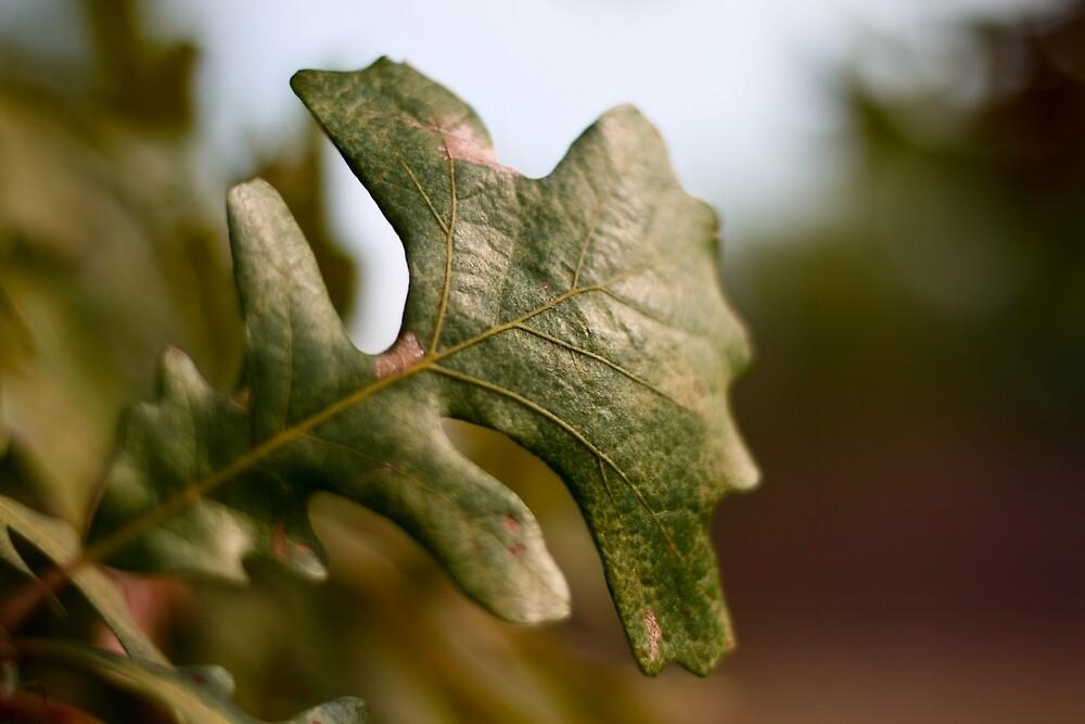 Green leaf by Jaime de la Cruz