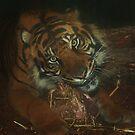 Sumatran Tiger Male by Franco De Luca Calce