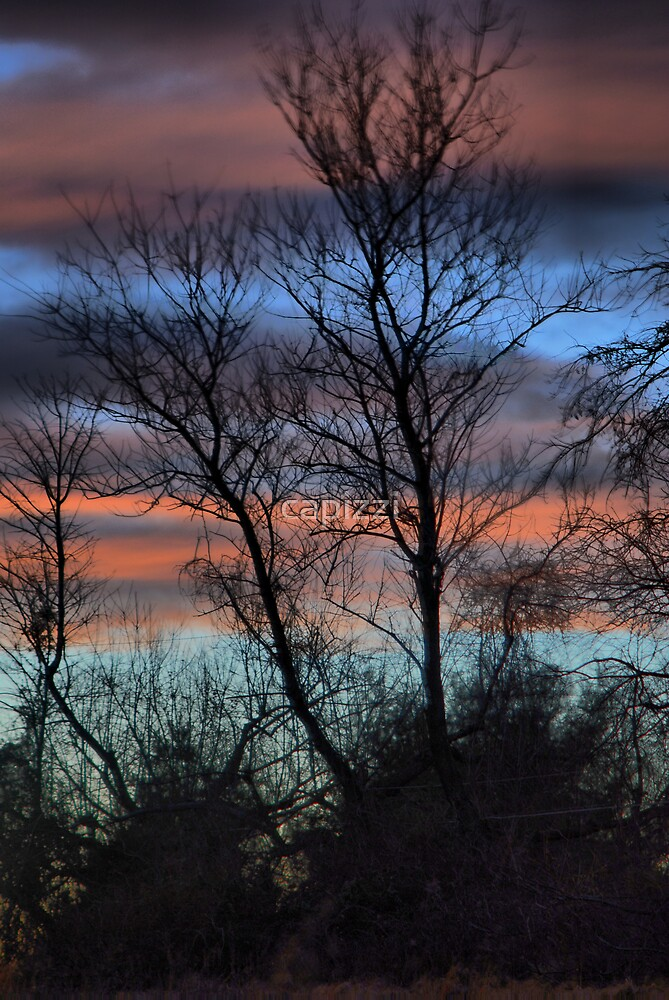 Beautiful Evening by capizzi