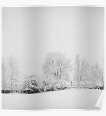 tree snow Poster