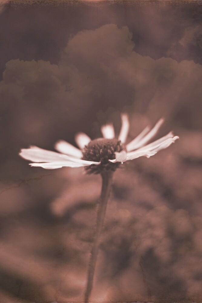 Flower in you by Jaime de la Cruz
