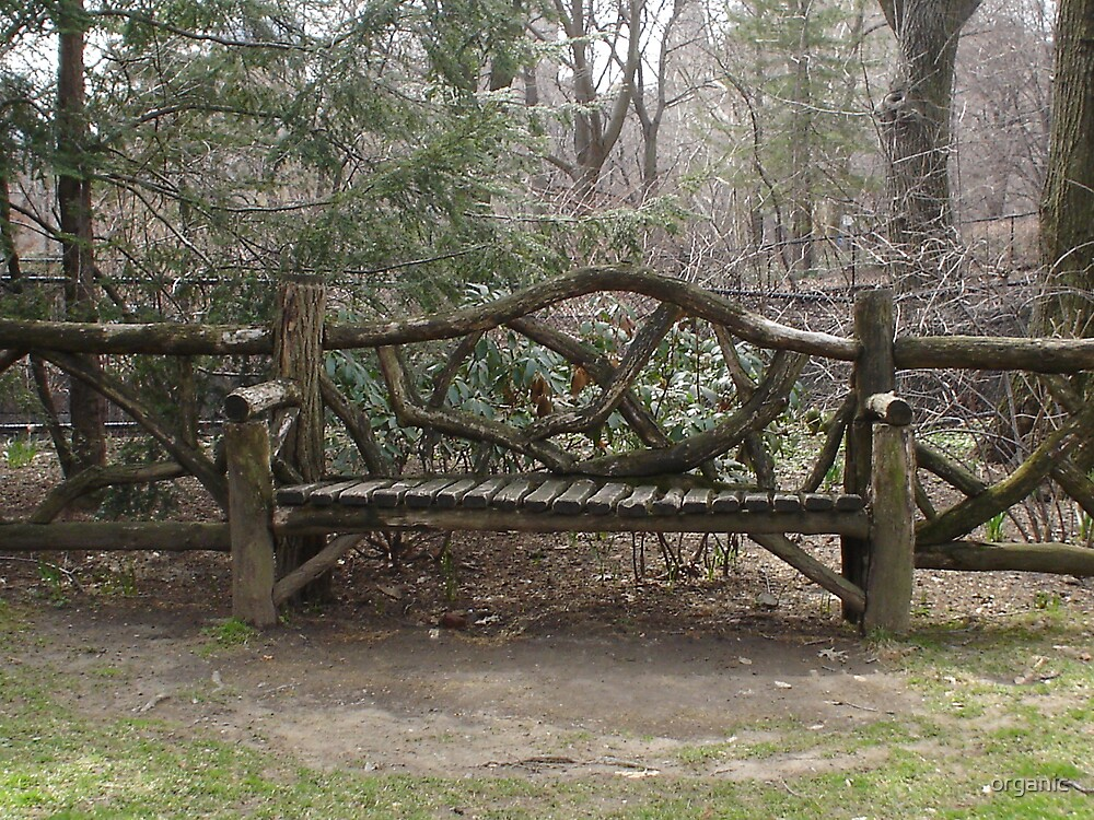 Central Park Bench by organic