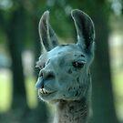 I'm one hot Llama. by Paul Gitto
