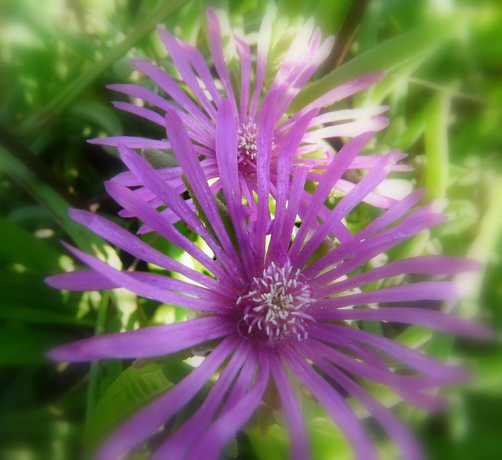 Purple Passion by rasnidreamer