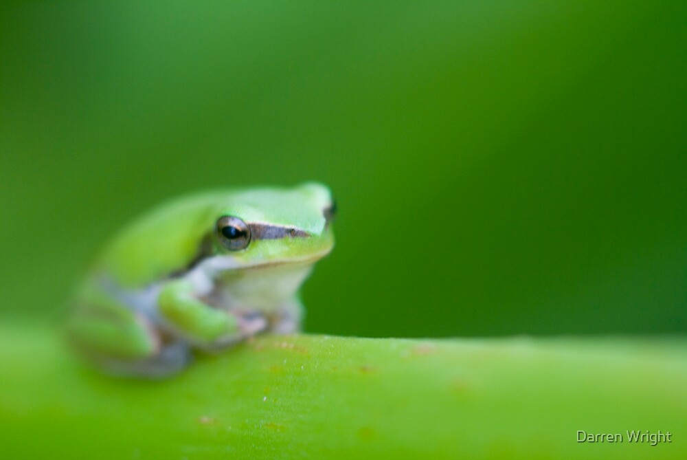 Green Frog by Darren Wright