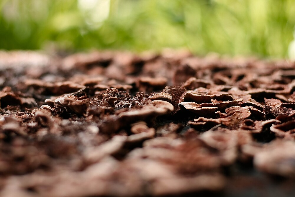 Its organic by Jaime de la Cruz