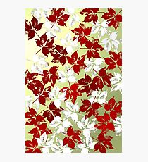 Red and white leaves Photographic Print