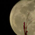 Moon Rise 014 by dge357