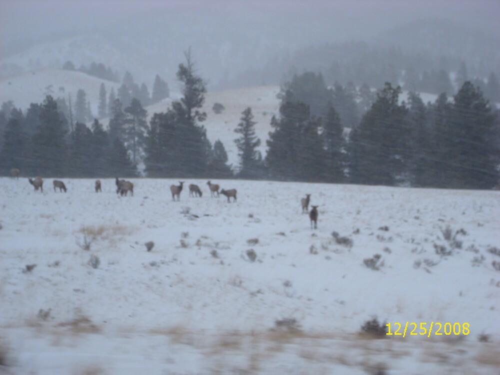 elk by crazechik