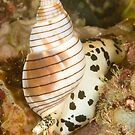 Sea Snail by Dan Sweeney