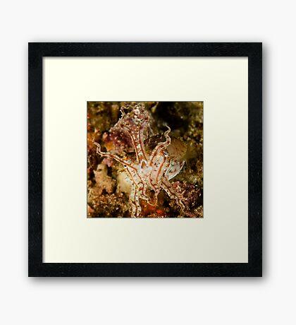 Pissed Cuttlefish Framed Print