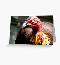 Brush Turkey Greeting Card