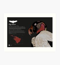 King Vulture Infographic Art Print