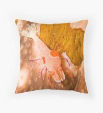 Emperor Shrimp on Sea Cucumber Throw Pillow