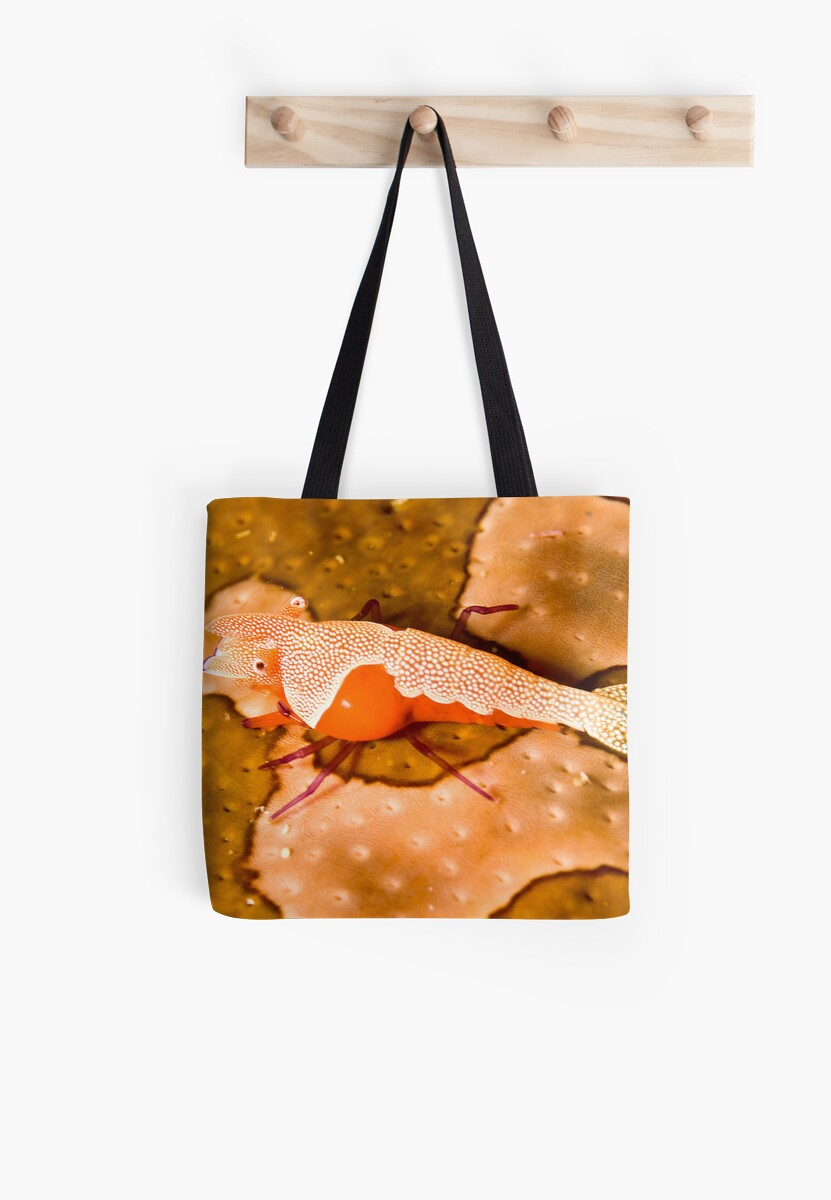 Emperor Shrimp on Sea Cucumber by Dan Sweeney