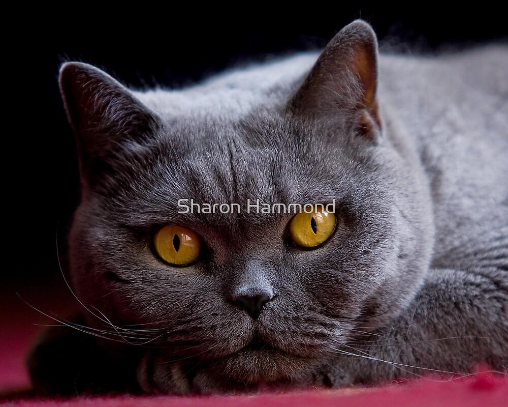Eye Contact by Sharon Hammond