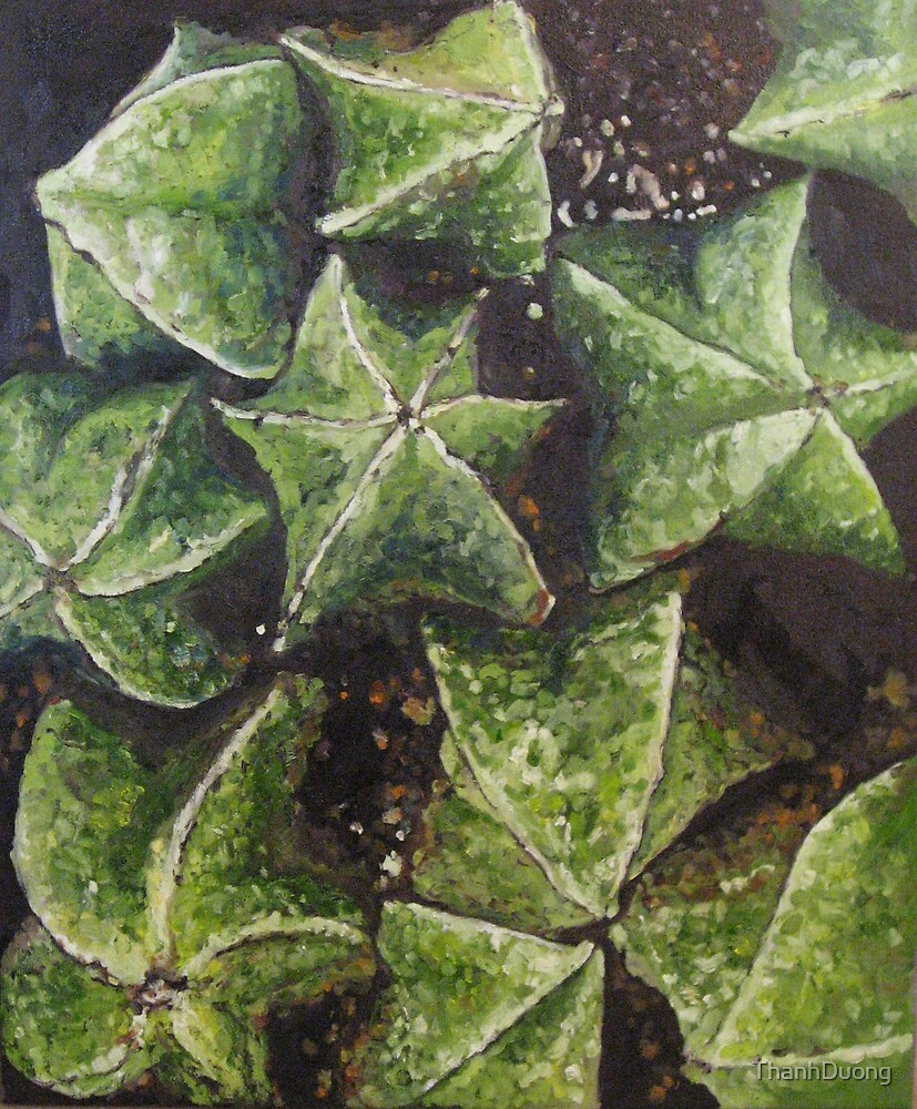Star Fruit by Thanh Duong